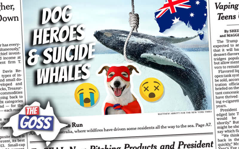 pete smissen, host of aussie english, the goss australia, dog protects kittens from cold, whale migration australia, stranded blue whales, old australia convict