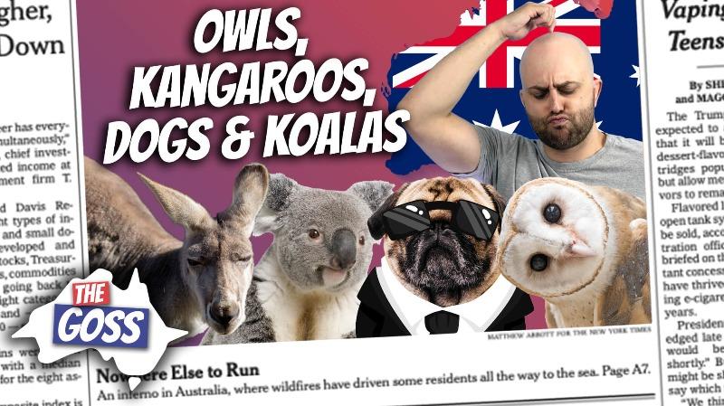 pete smissen, host of aussie english, the goss australia, ian smissen father, rocky the rockefeller owl, rockefeller christmas tree owl, talking kangaroos, dogs trained to protect bandicoots from predators