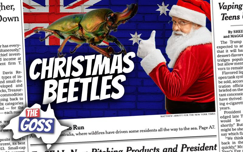 pete smissen, host of the aussie english podcast, talks to ian smissen, the goss australia, australia news, christmas beetles, what is christmas beetles, christmas beetles australia, what kinds of beetles australia