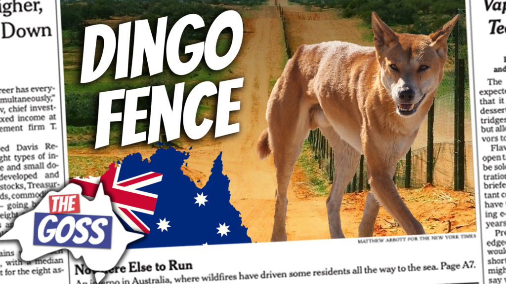 pete smissen, host of aussie english, the goss australia, ian smissen father, learn australian english, what are dingoes