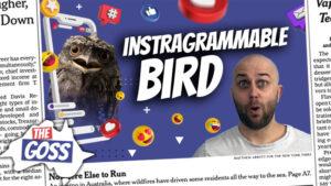 pete smissen, host of aussie english podcast, most instagrammable bird, frogmouth bird australia, frogmouth bird, ugly bird australia, australia oldest person, dexter kruger australia, australia oldest male