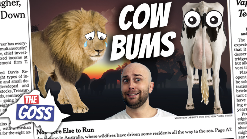 pete smissen, host of the aussie english podcast, ian smissen, the goss australia, drawing eyes on cow butts, i cow project botswana, how to prevent lion attacks on cows, cattle farmers botswana, botswana cow farmers