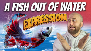 pete smissen, aussie english podcast, learn english australia, learn english with pete, learn language podcast, australian podcast host, learn english podcast, learn english online course, english expression examples with meaning, fish out of water meaning, use fish out of water in a sentence