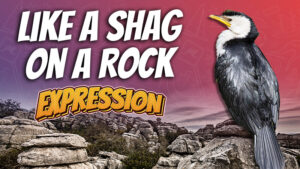 pete smissen, aussie english podcast, learn english australia, learn english with pete, learn language podcast, australian podcast host, learn english podcast, learn english online course, english expressions examples with meaning, like a shag on a rock meaning, use like a shag in a rock in a sentence, what is shag australia, shag meaning, bird on a rock, bird expressions